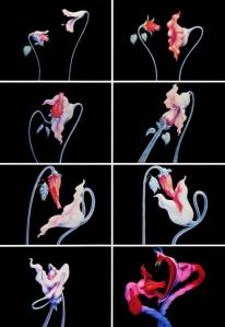 pf-flowersseq
